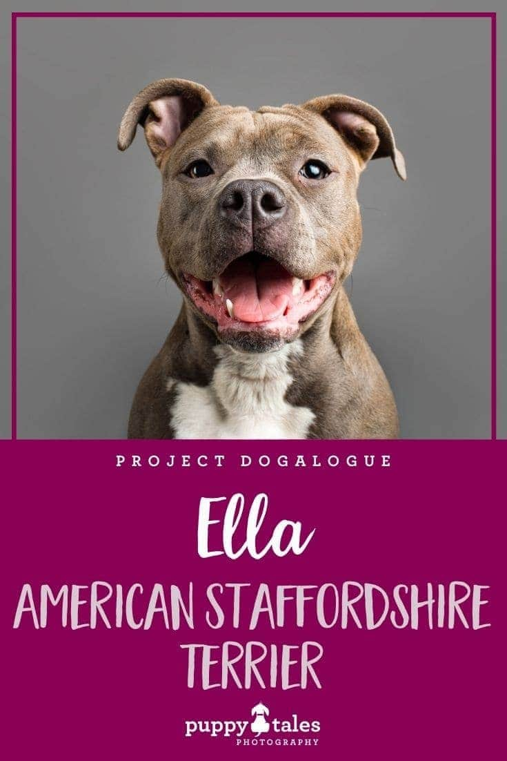 Ella the eight-month-old American Staffordshire Terrier puppy. She was photographed by Puppy Tales Photography for Project Dogalogue.