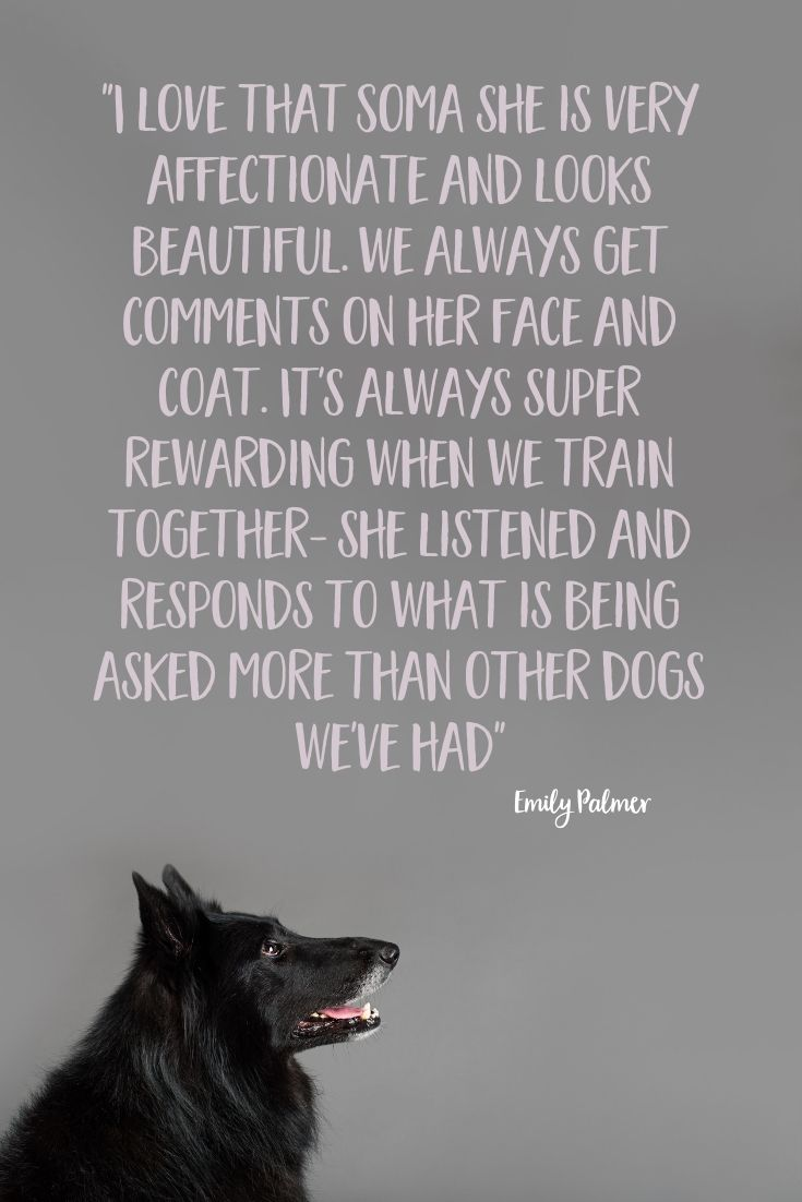 Soma the Belgian Shepherd, photographed by Puppy Tales Photography for Project Dogalogue
