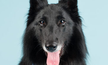 Three-year-old Soma the Belgian Shepherd was photographed in Puppy Tales' Project Dogalogue.