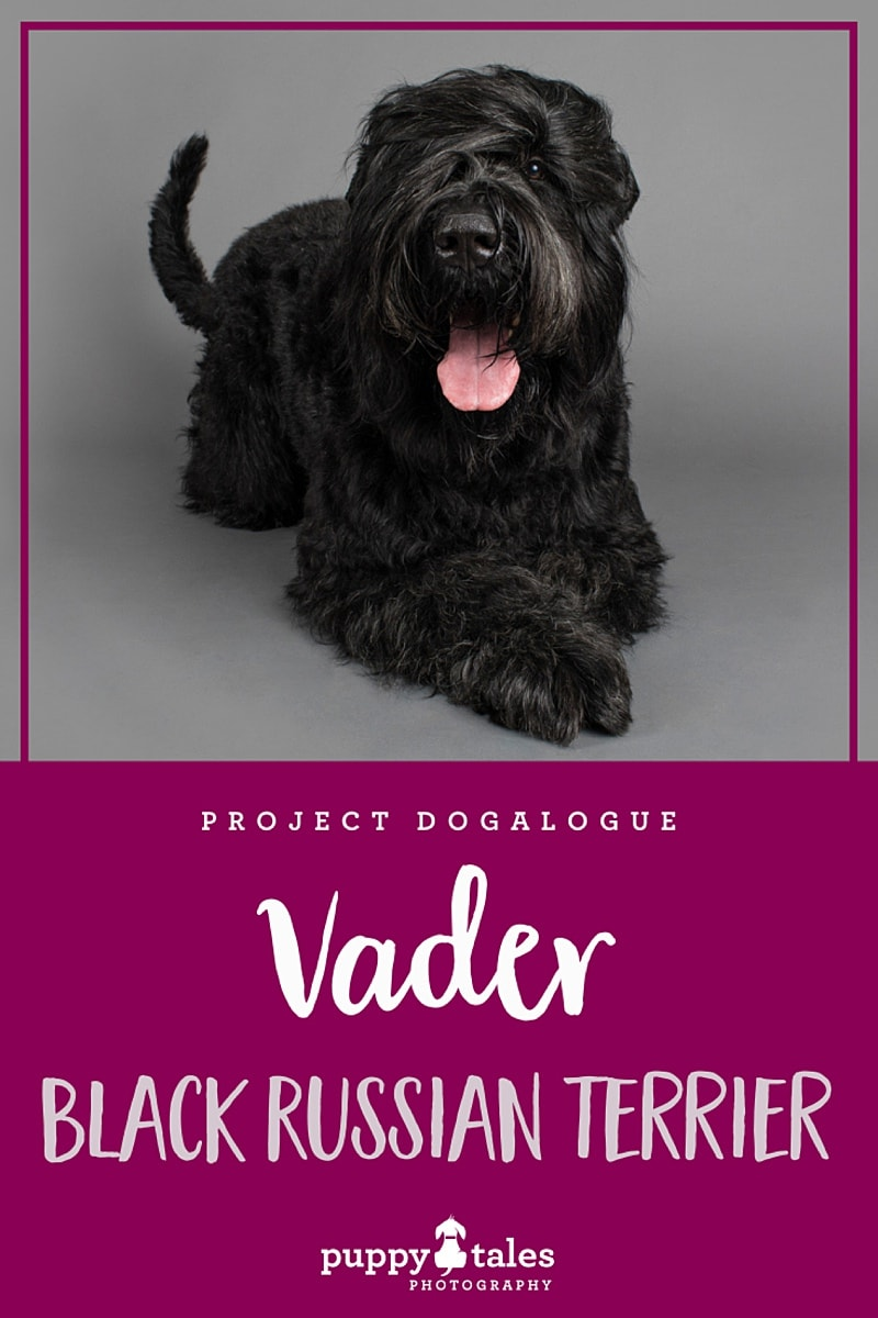Pinterest graphic for Vader the Black Russian Terrier. He was photographed by Puppy Tales Photography for Project Dogalogue.