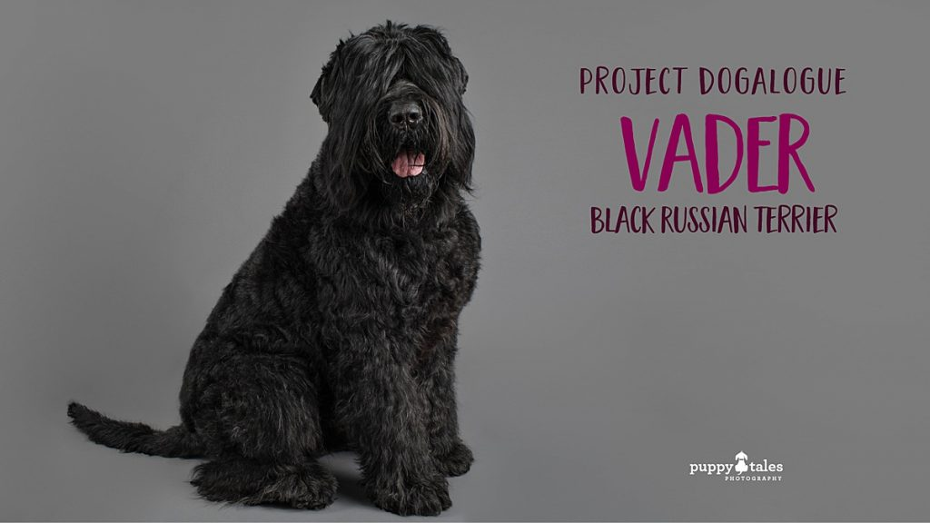 Black Russian Terrier Vader was photographed by dog photographer Kerry Martin for Project Dogalogue.