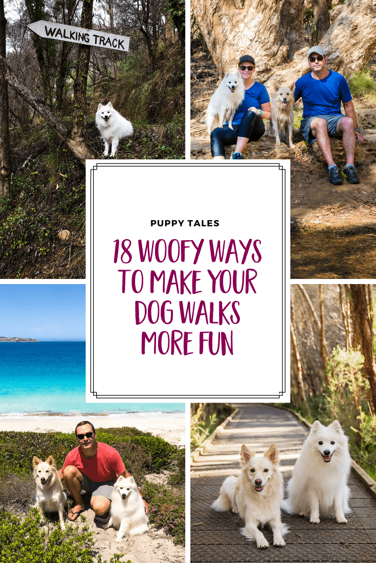 Pinterest graphic for Puppy Tales article on the 18 ways to make your dog walks more fun