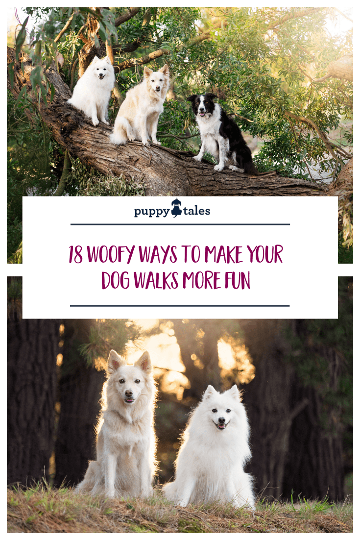 Pinterest graphic for Puppy Tales article on the 18 woofy ways to make your dog walks more fun
