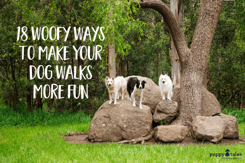 Feature image for Puppy Tales article on making dog walks more fun. Image features three dogs standing on a big rock.