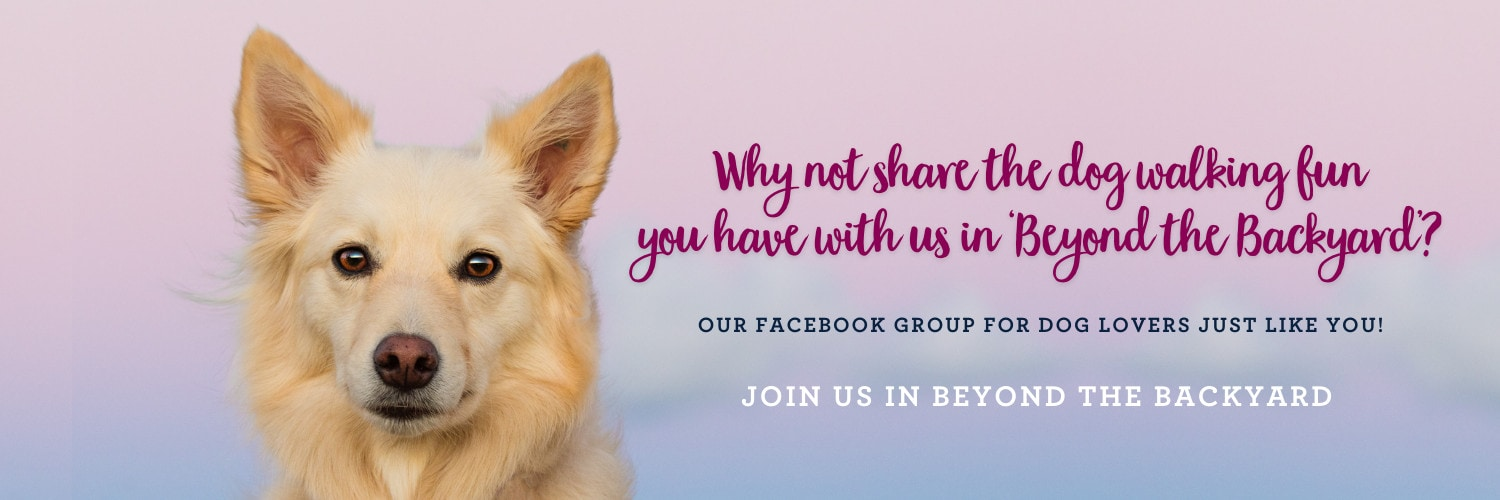 """A banner with a dog that has a colourful background that says, """"Why not share the dog walking fun you have with us in 'Beyond the Backyard'?"""""""