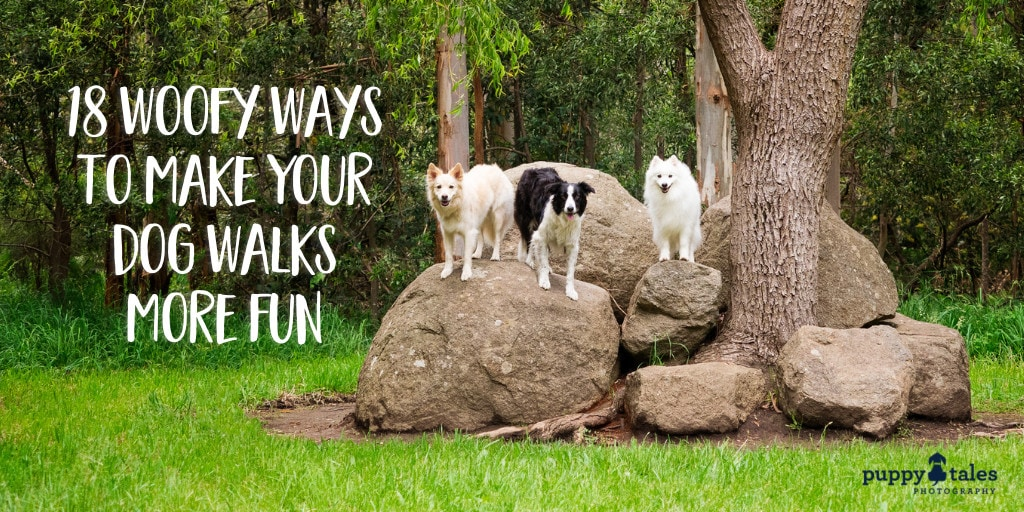 Title for an article on dog walks featuring three dogs standing on a big rock beside a huge tree.