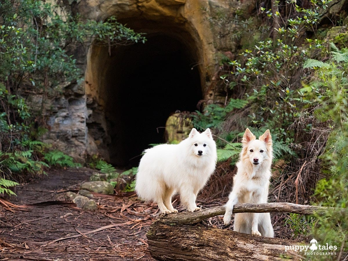 Two dogs pose in front of a tunnel - their dogs walks are more fun by finding new places like this.